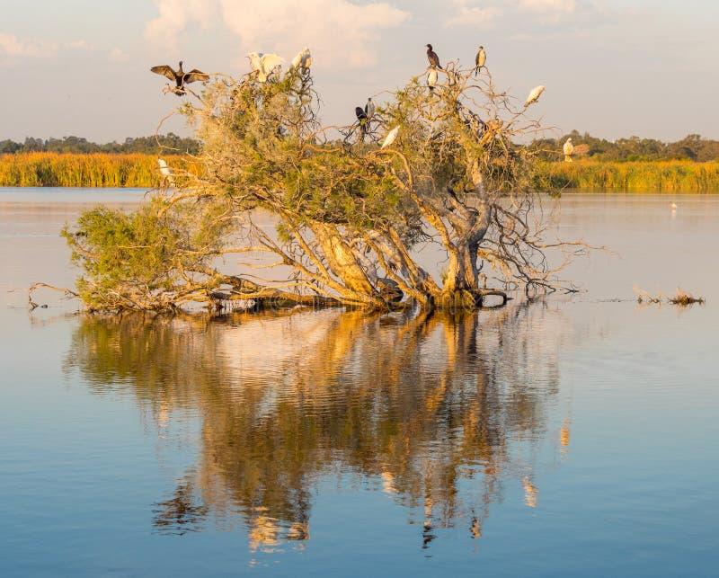 Árbol del lago herdsman imágenes de archivo libres de regalías