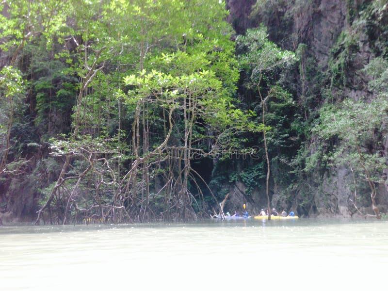 Árbol del mangle de la playa del mar de Tailandia Asia de la isla imagenes de archivo