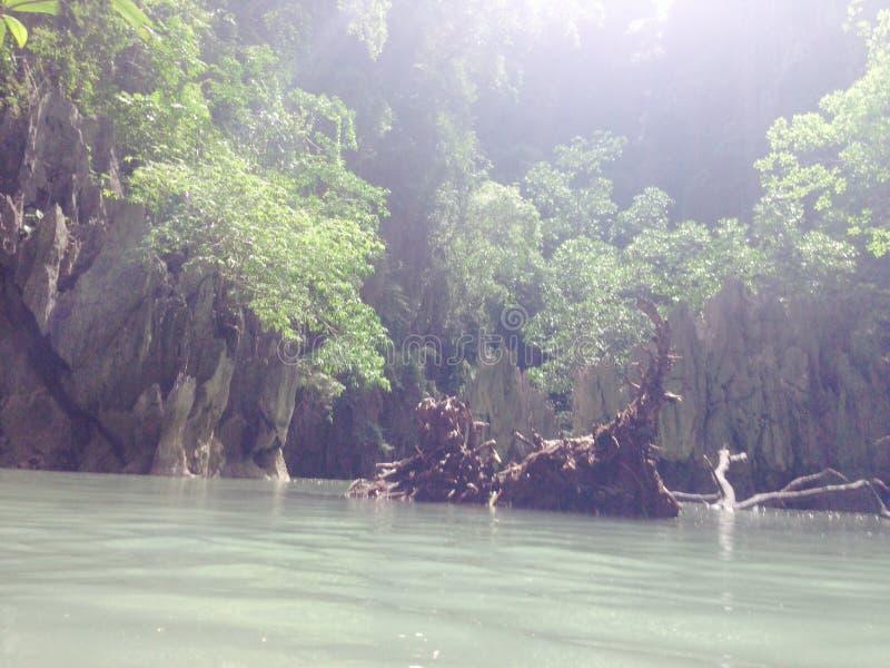 Árbol del mangle de la playa del mar de Tailandia Asia de la isla imagen de archivo libre de regalías