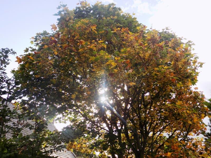 Árbol del otoño imágenes de archivo libres de regalías