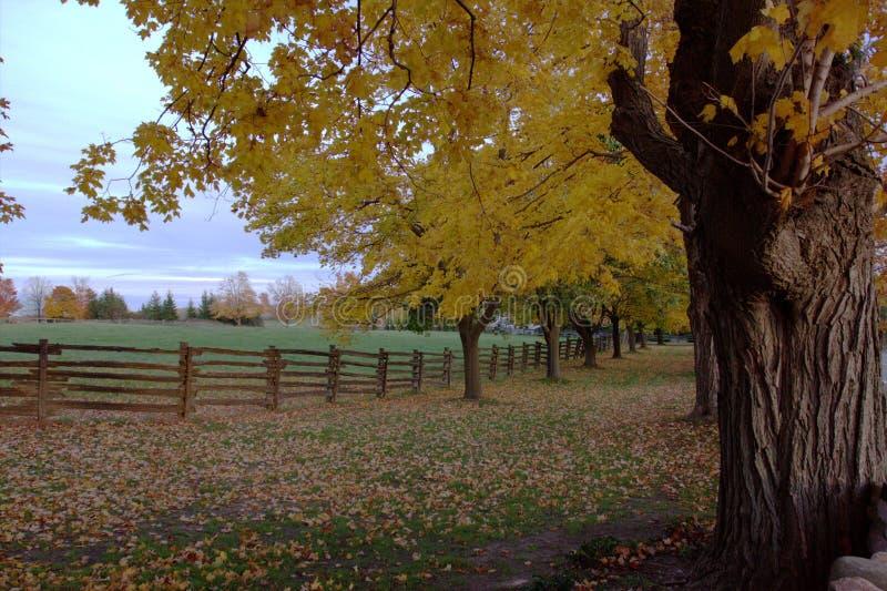 Árbol del otoño imagenes de archivo