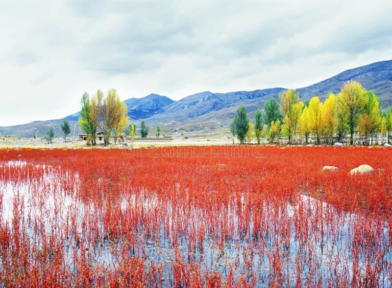 Árbol del otoño e hierba roja imagenes de archivo