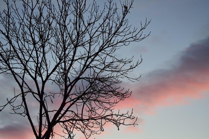 Árbol del otoño en la puesta del sol fotos de archivo