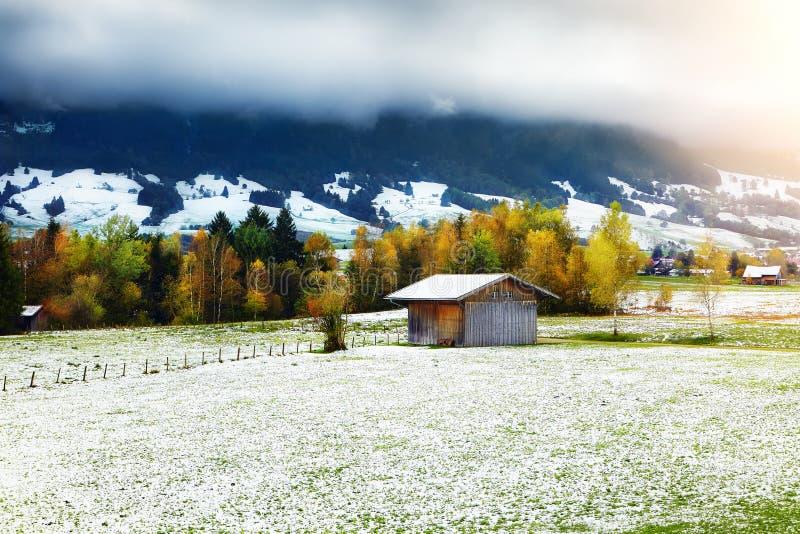 Árbol del otoño, hierba y primera nieve con el cielo nublado y las montañas fotografía de archivo