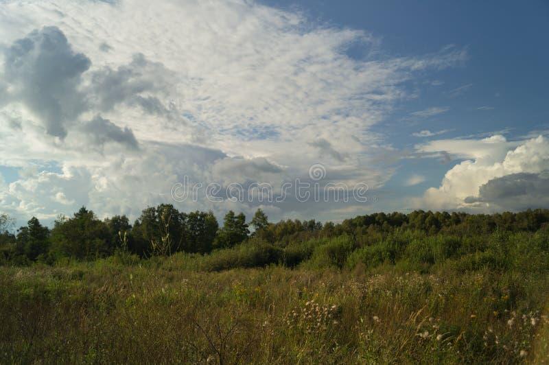 Árbol del paisaje en las nubes del azul del campo fotos de archivo