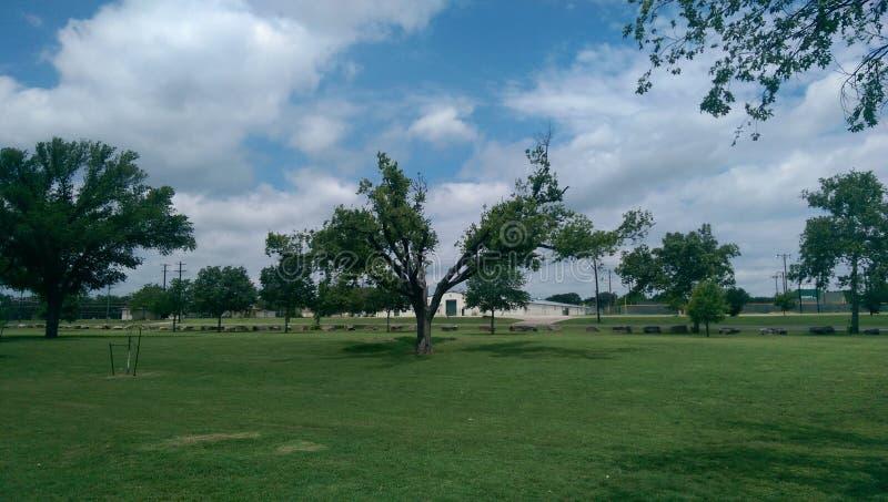 Árbol del parque imágenes de archivo libres de regalías