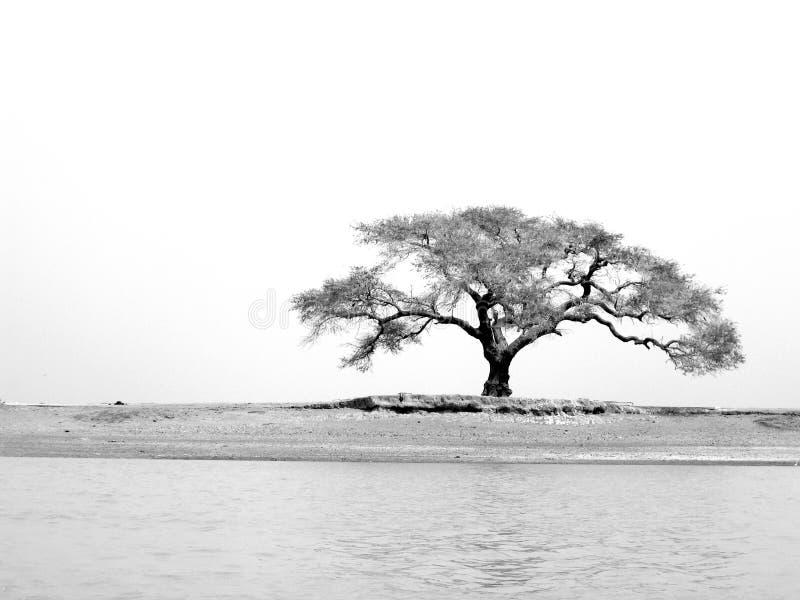 Árbol del río de Niger fotografía de archivo