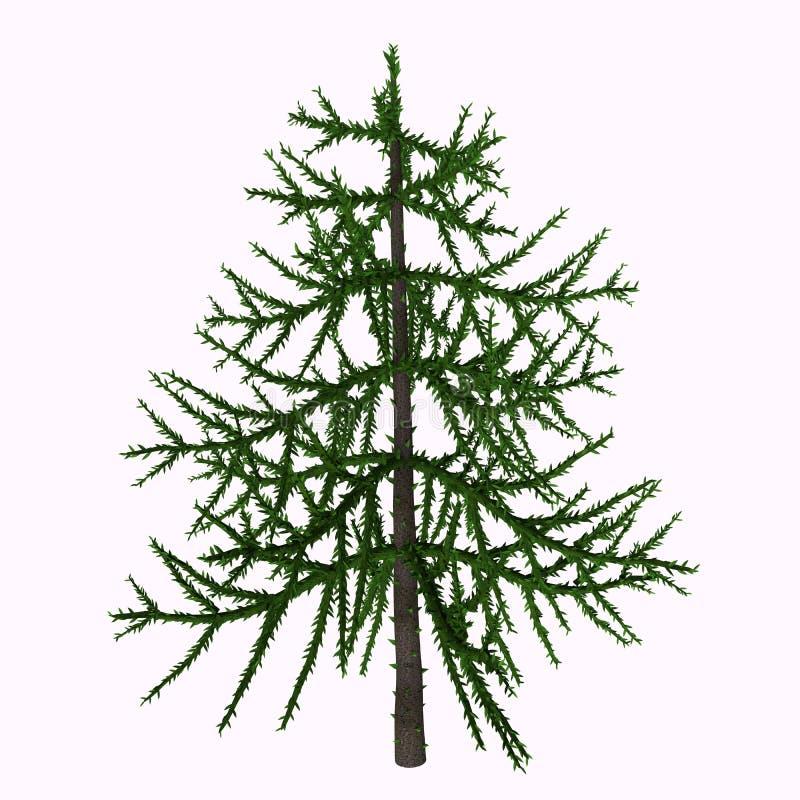 Árbol del SP de la araucaria libre illustration