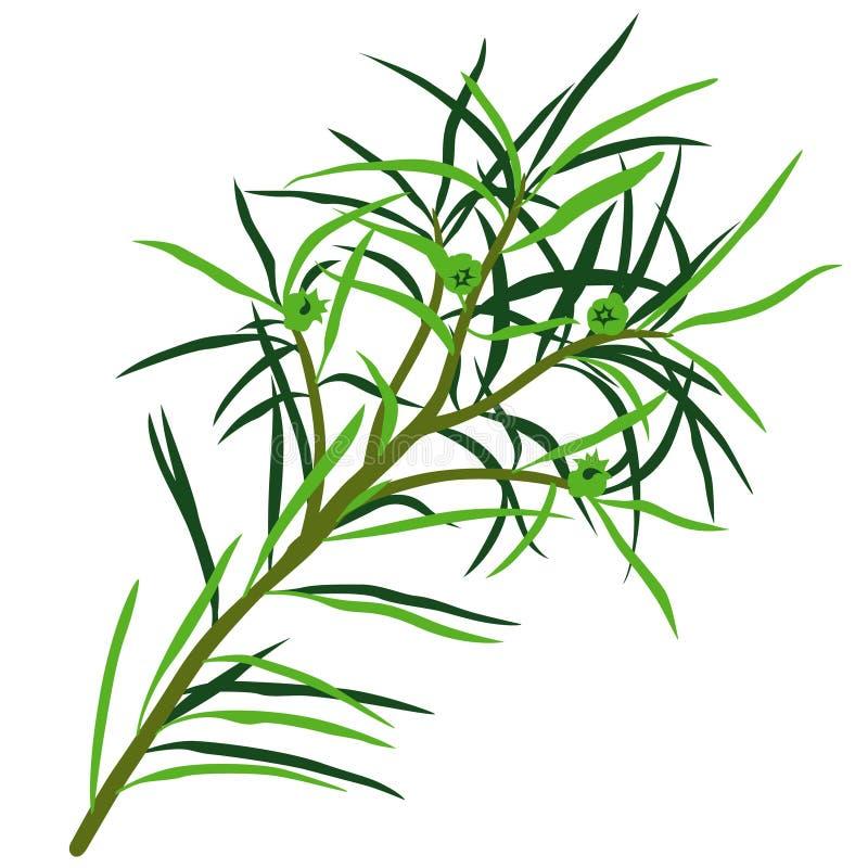 Árbol del té ilustración del vector