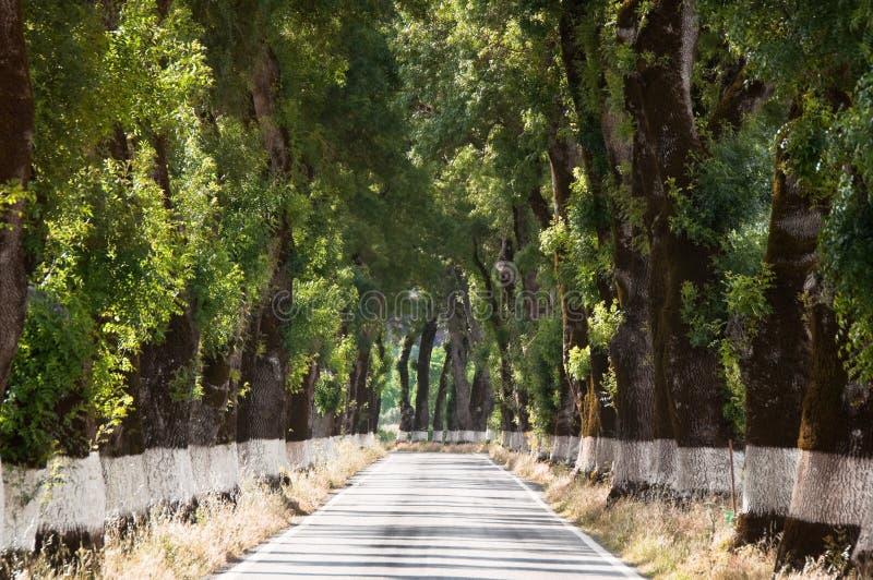 Árbol del túnel, Alentejo (Portugal) fotos de archivo