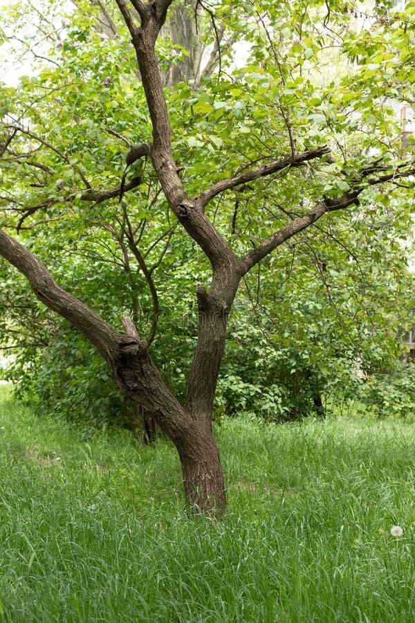 Árbol del verano en el parque imágenes de archivo libres de regalías