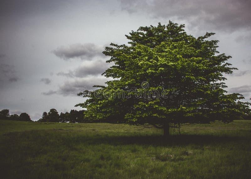 Árbol derecho solitario imagen de archivo