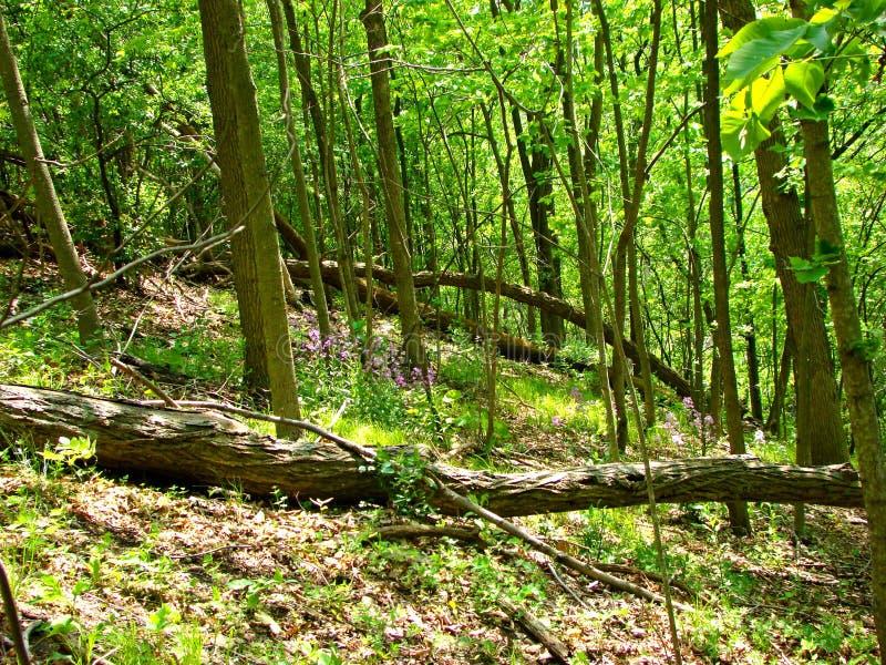 Árbol derribado bosque fotos de archivo
