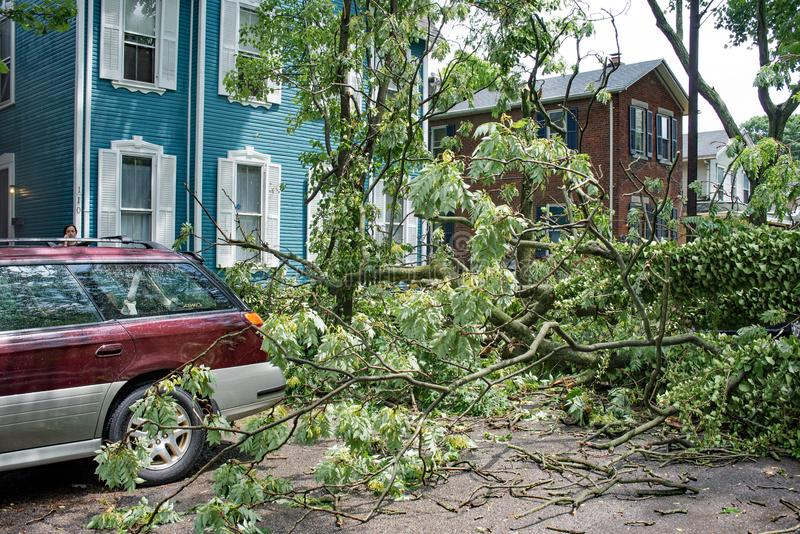 Árbol derribado en calle después de la tormenta severa imagenes de archivo