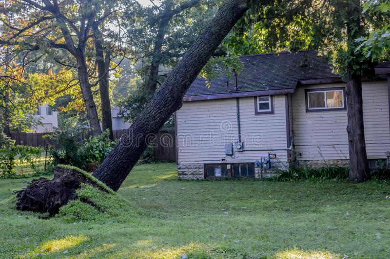 Árbol desarraigado en tormenta del Microburst fotos de archivo