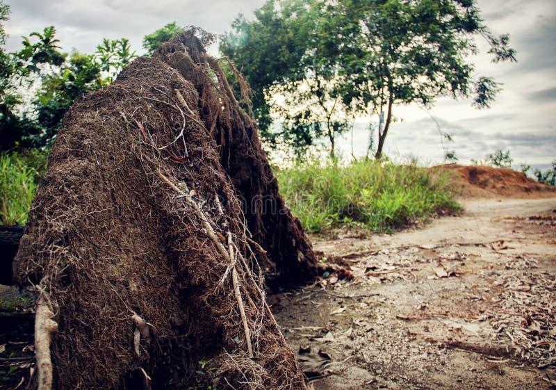 Árbol desarraigado por la tormenta fotos de archivo