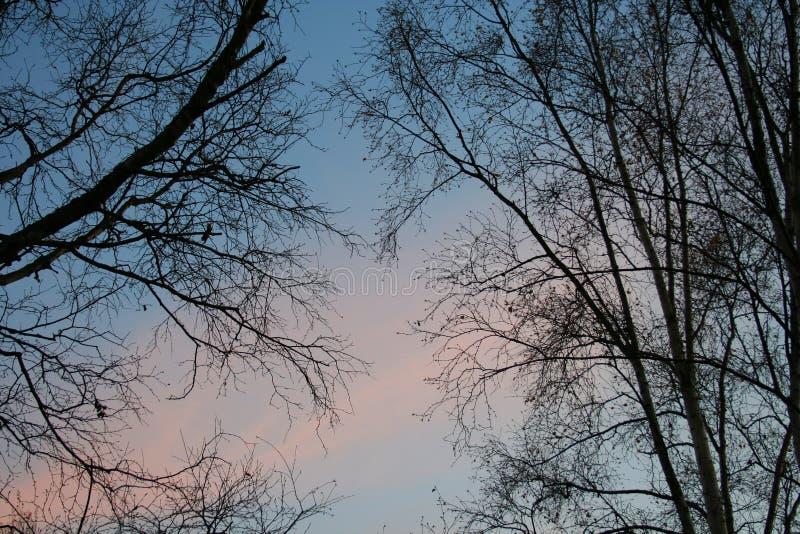 Árbol descubierto en la puesta del sol imagen de archivo libre de regalías