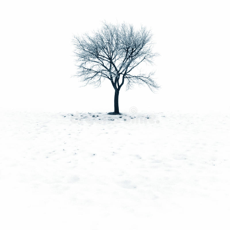 Árbol descubierto en nieve fotos de archivo libres de regalías