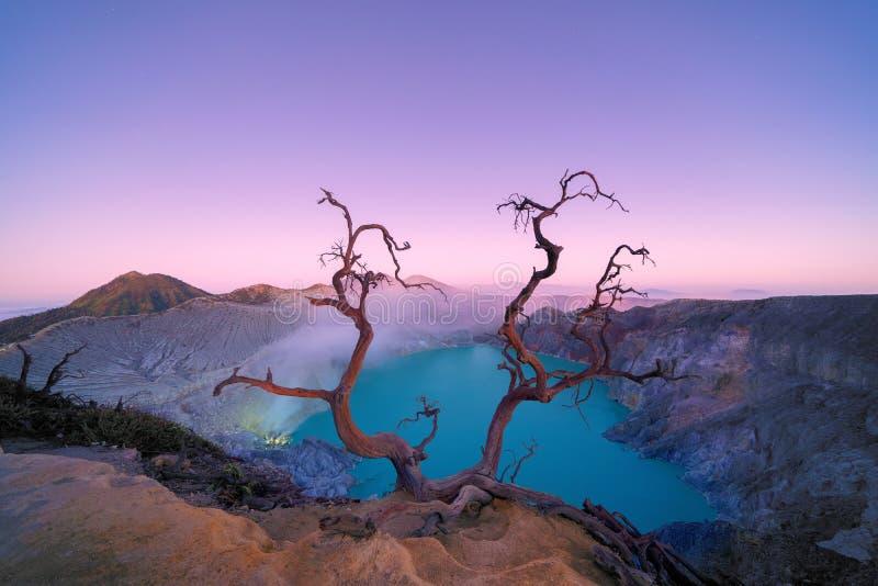 Árbol deshojado de Deadwood en el volcán de Kawah Ijen con el lago del agua de azufre de la turquesa en la salida del sol Visión  imagen de archivo libre de regalías