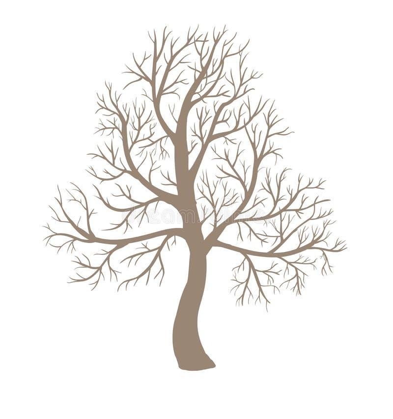 Árbol deshojado grande stock de ilustración