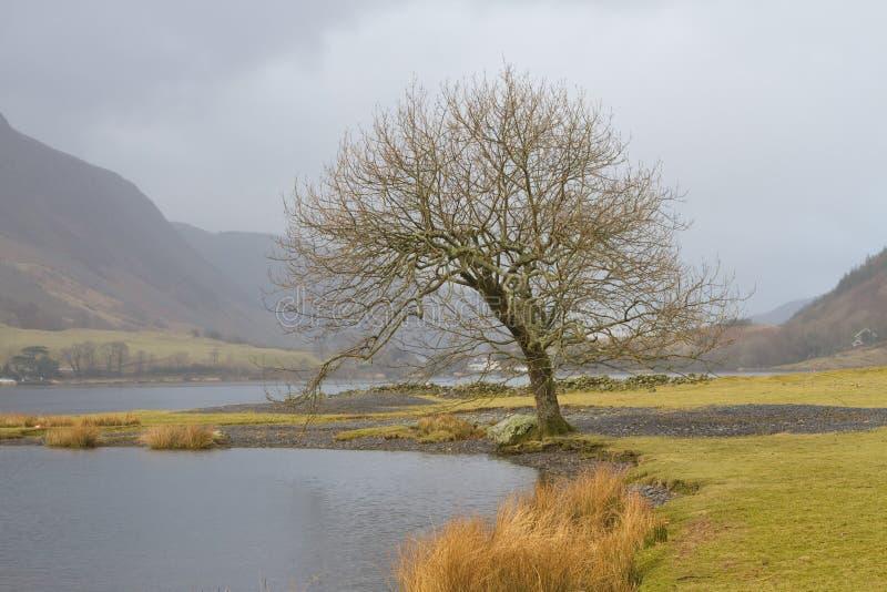 Árbol deshojado por el lago fotos de archivo