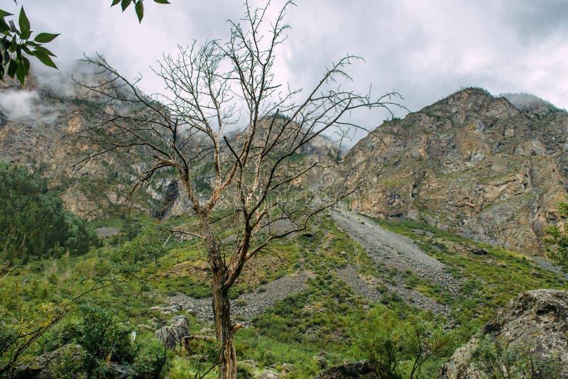 Árbol deshojado solo en las montañas Árbol muerto en el fondo de rocas y de la niebla fotos de archivo