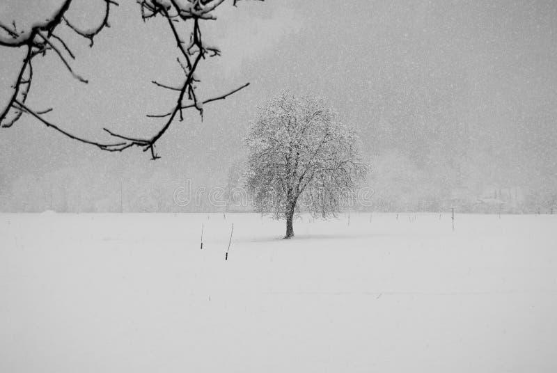 Árbol desnudo durante un día de las nevadas imágenes de archivo libres de regalías