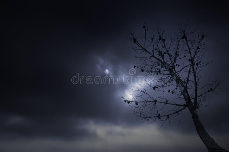 Árbol desnudo en una noche cubierta de la Luna Llena imagen de archivo libre de regalías