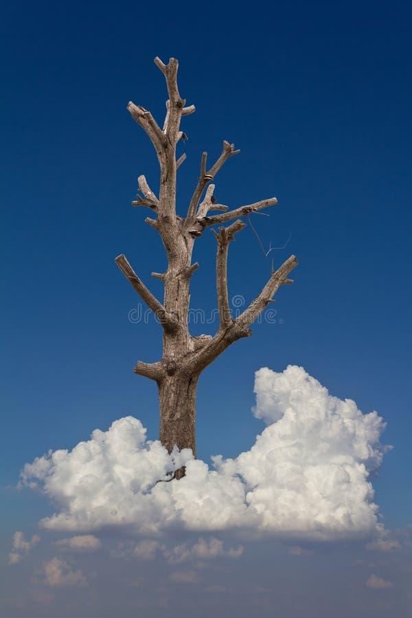 Árbol desnudo en una nube foto de archivo libre de regalías