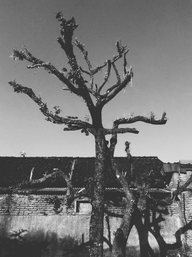 Árbol desnudo solamente foto de archivo libre de regalías