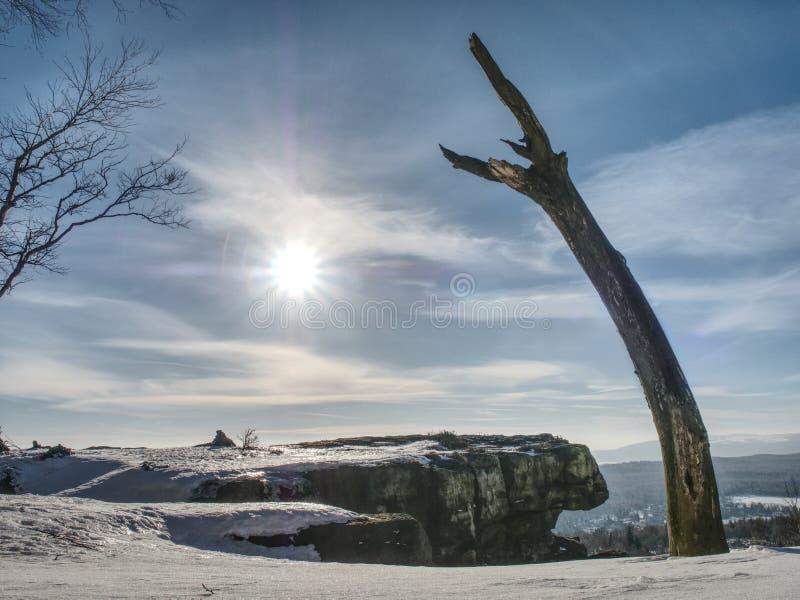 Árbol doblado y quebrado en la nieve en invierno fotografía de archivo