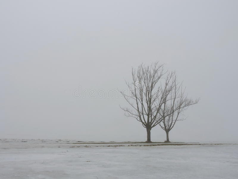 Árbol dos en niebla foto de archivo libre de regalías