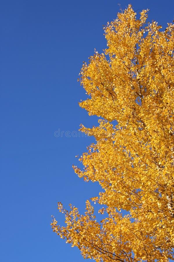 Árbol durante caída fotografía de archivo libre de regalías