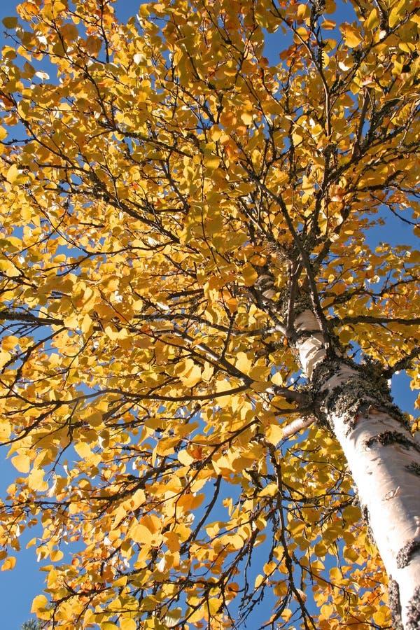 Árbol durante caída imagen de archivo