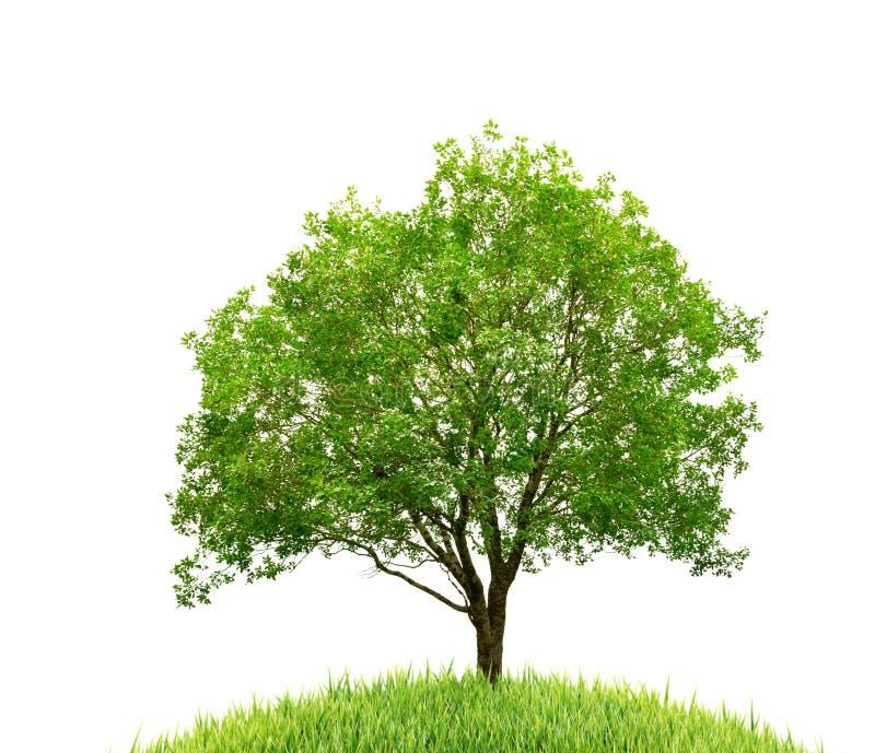 Árbol e hierba aislados imagen de archivo
