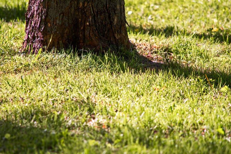Árbol e hierba verde en luz brillante del contraste fotografía de archivo libre de regalías