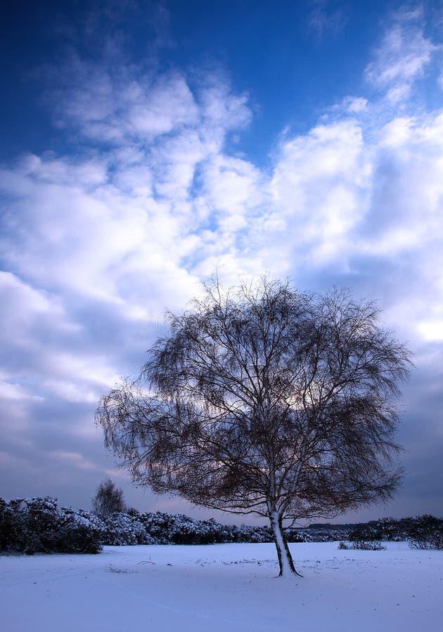 Árbol el día de invierno imagenes de archivo