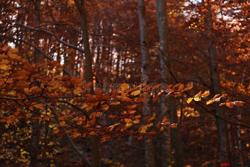 Árbol en bosque del otoño fotografía de archivo