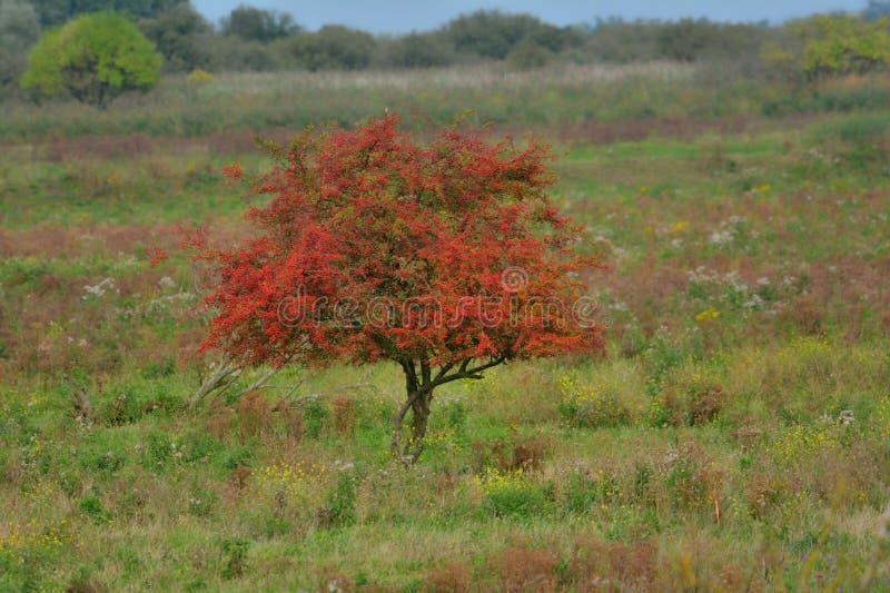 Árbol en collors del otoño fotografía de archivo libre de regalías