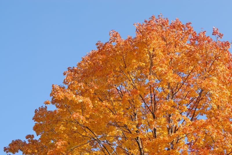 Árbol en colores del otoño imagen de archivo libre de regalías