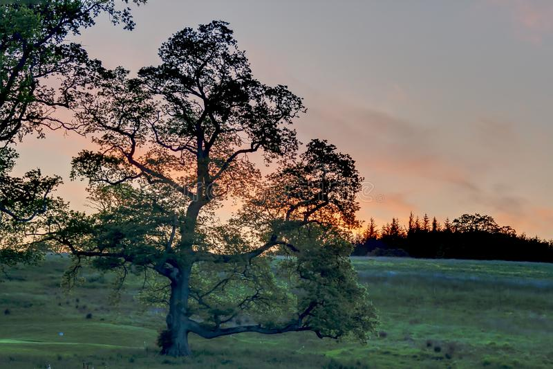 Árbol en contraluz durante puesta del sol fotografía de archivo libre de regalías