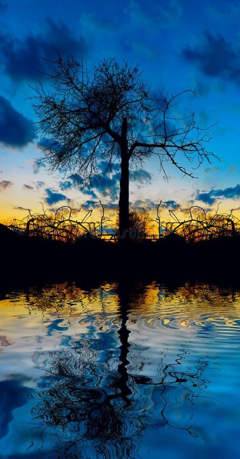 Árbol en el agua imagen de archivo