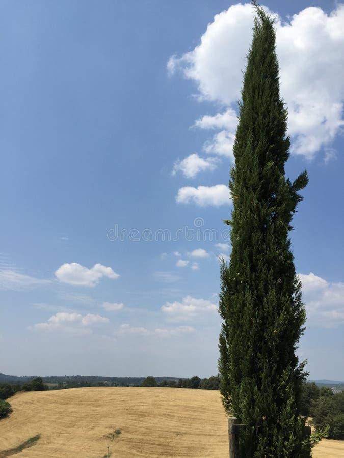 Árbol en el borde de la carretera en Toscana, Italia fotografía de archivo libre de regalías