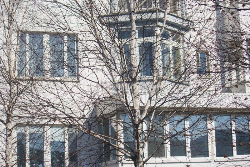 Árbol en el fondo de una casa residencial imagen de archivo
