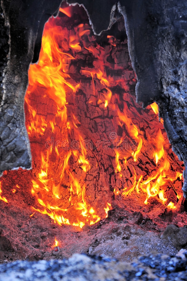 Download Árbol en el fuego foto de archivo. Imagen de caliente - 7280712