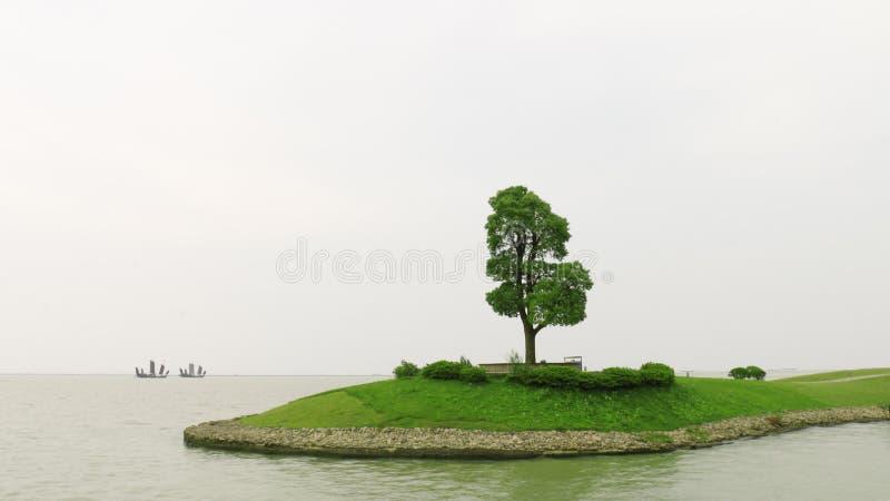 Árbol en el lago foto de archivo