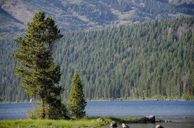 Árbol en el lago imagenes de archivo