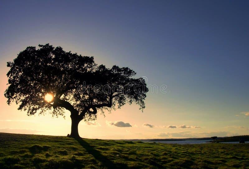 Árbol en el lago Alqueva imagen de archivo libre de regalías