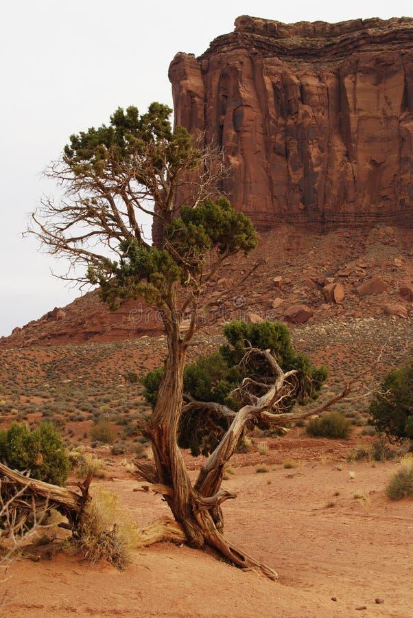 ?rbol en el paisaje rojo del desierto del valle del monumento foto de archivo
