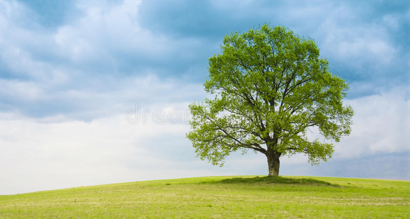 Árbol en el prado imagenes de archivo